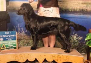 2018 WinnerSunday - Shalyn's Sweet Virginia Breeze  - Best Puppy