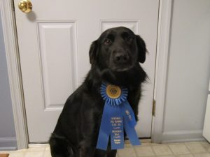 Kaya sporting her 1st place GN rosette