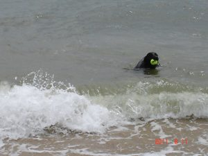 I love swimming in the Chesapeake Bay at Fort Monroe
